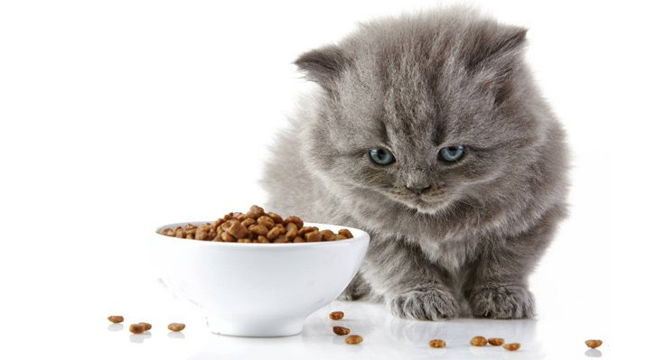 low carb dry cat food